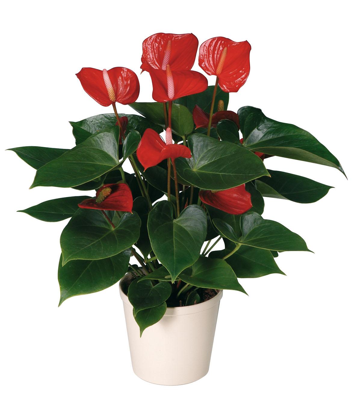 Комнатные цветы оптом купить в москве с картинками кде можно купить тюльпаны оптом.алтуфьево